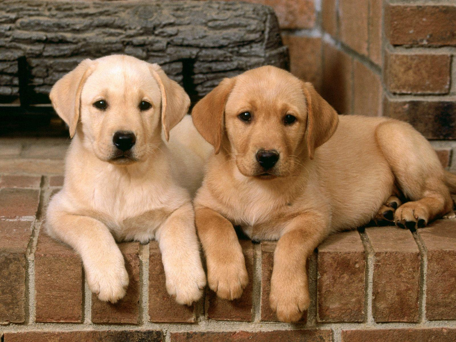 LIST OF BEST TOP 5 DOGS FOR KIDS